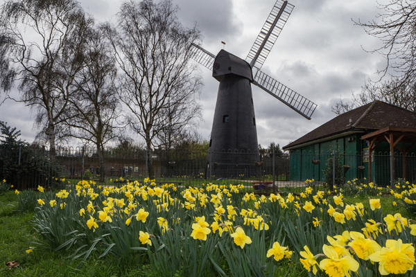 Spring in Windmill Gardens