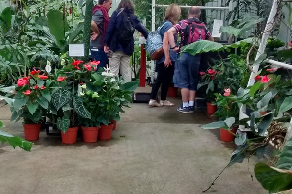 Tropical Nursery at Kew Gardens