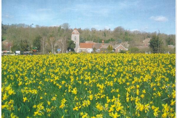 Addington Church at daffodil time