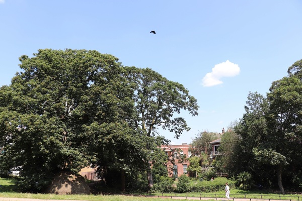 Woodlands Park - rear of small shopping parade, Acton High St. Birthplace of Waitrose (1904)