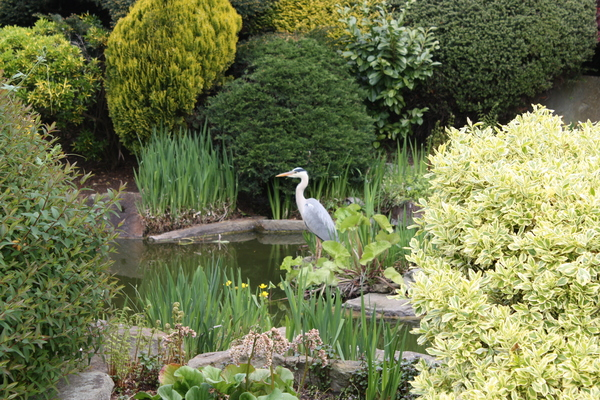 Memorial Garden Pond