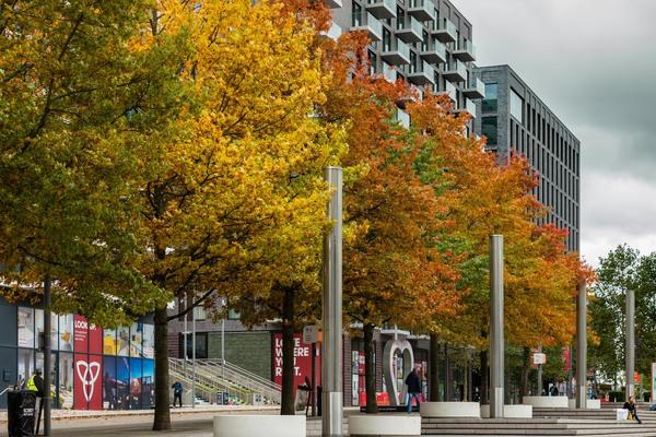 Trees on Wembley Park Boulevard