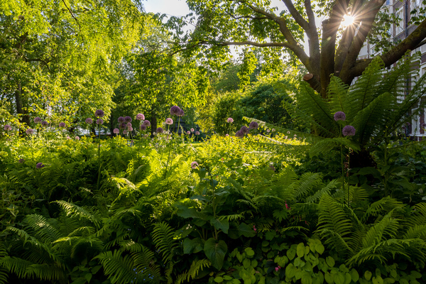 The Woodland bed beneath Prunus sargentii